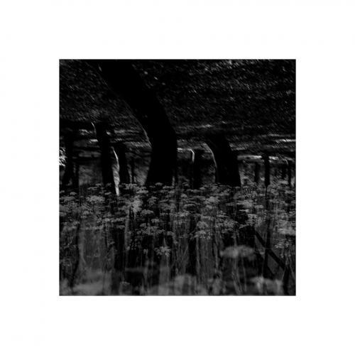 036-FotoNat